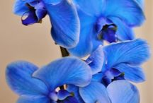 Gardens  / Orchids
