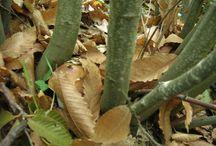 funghi estivi