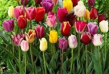 FABULOUS FLOWERS / by Jay Mesko