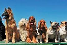 kutyák / kutyákról