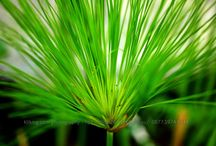 Flora & Plants Photos