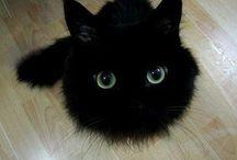 Kitten / 可愛いやつ