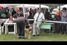 Kutyakiállítások / Kutyakiállításokon készített videók.