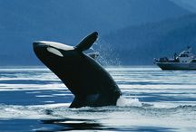 British Columbia Trip Ideas / Looking for BC vacation ideas? Check out some of our favourites!