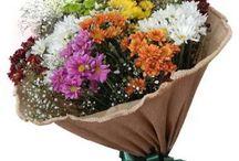 Floricultura Tânia e Gilda