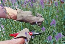 Gardening / Great gardening ideas