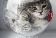 kočky / koček