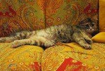Animals / by Fabiana Fabipasticcio blog