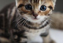 kotki, koty, koteczki