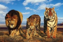 big cats / by Theresa Clark