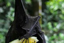 Batty-Bats / Bat appreciation board!