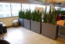 rośliny do biura