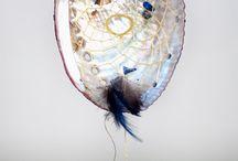 paua shell  ideas