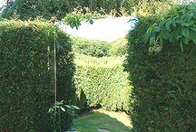 lustra w ogrodzie