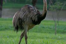 My Wonder Zoo : Road Runner (Bip Bip) ! / Ostrich, Emu ...
