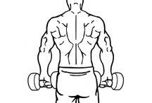 Back muscle mass