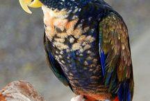 Leuke en mooie vogels.