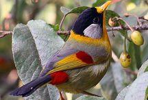 Pássaros e cia