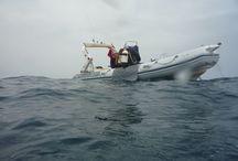 La plongée / Découvrez le monde sous-marin comme Sébastien Ricci le voit au fil de ses expéditions !