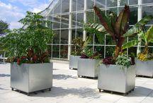 Galvanised outdoor planters
