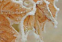 La beauté des saisons / Aussi bien pour un fond d'écran que pour le plaisir, ces images sont magnifiques !