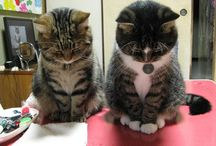 CAT /  사랑스런 고양이들