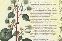 Pflanzenportraits