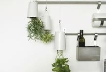 plant based whole food journey