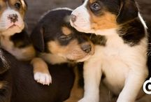 Best Facebook Pages For Dog Lovers