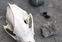 Черепа / Skulls / Статуэтки в виде черепов