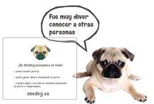 ALQUILA UN PERRO / ¿Alguna vez pensastes en alquilar un perro?, ahora ya es posible, visita http://onedog.es/  y empieza ahora!