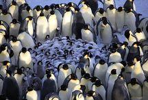 Penguins / by Loh Hon Chun