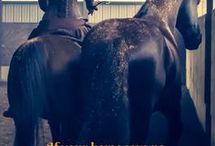 Horses - my souls dr