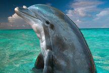 Dolphins / by Kim Harnett