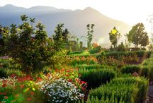 L'Amandier Gardens / The beautiful gardens and grounds of L'Amandier luxury boutique hotel in Morocco.