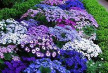 virágos kertek