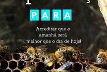 Inspirational quotes for bees / Inspirar pessoas através das abelhas e da apicultura natural |apicultura|apicultura natural|beekeeping|bees|hives|colmeias|apicultor|inspirational quotes for bees