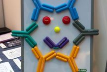 Antibody Magnets / Antibody fun with our interactive Anti-Idiotypic antibody models
