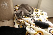 Cat / Masza - russianblue :)