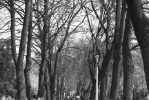 Oradea in Black & White / Oradea City presented through Black & White photography