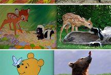 Disney kuvia