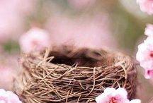 spring / by Jarek Brozyna