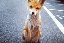 _foxy
