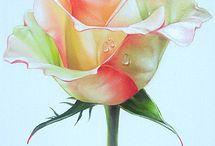 Цветы Роза