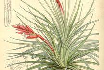 Pflanzenzeichnungen