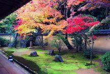 Architecture - garden