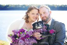 Wedding Dogs / Dogs are a fun addition to your wedding party, check out some of these cuties who were ring bearers and groomsmen or bridesmaids at Maine weddings photographed by Windy Hill Photography.