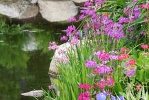 Pond Gardening / Habitat and native plant pond gardening