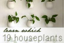 Create - Indoor plants