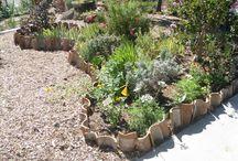Good Landscaping Ideas in Marin / Marin Good Landscaping Ideas